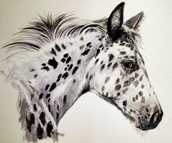 350x290 Appaloosa Drawing