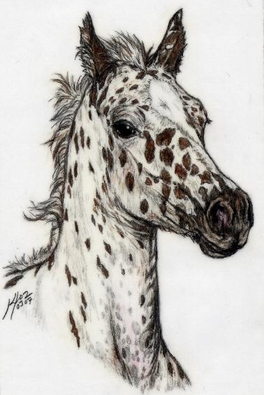 378x566 Appaloosa Foal By Embers