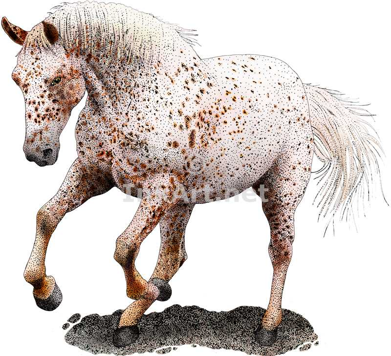800x728 Free Pictures Of Appaloosa Horses Colors