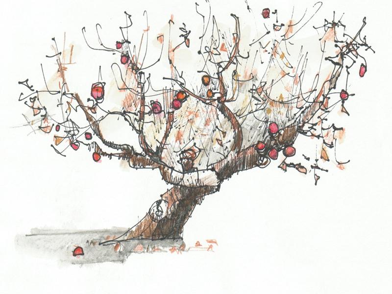 800x600 Apple Tree Drawing