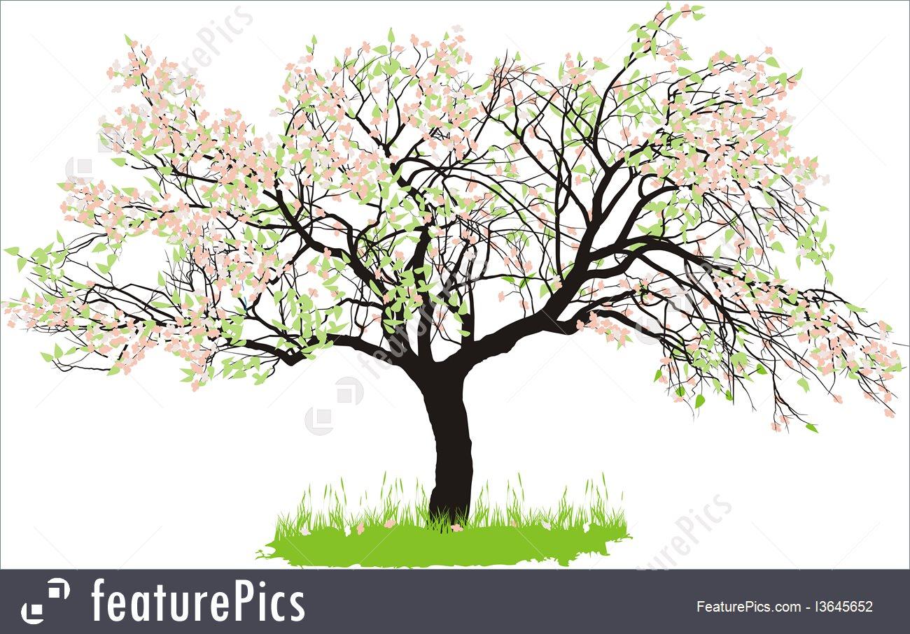 1300x907 Apple Tree In Spring Illustration