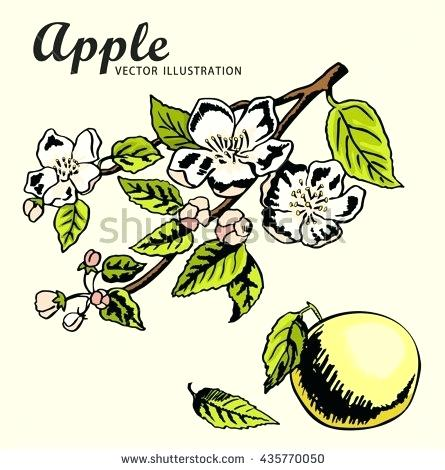 445x470 Apple Tree Pictures To Color Hand Drawing Apples On Apple Tree
