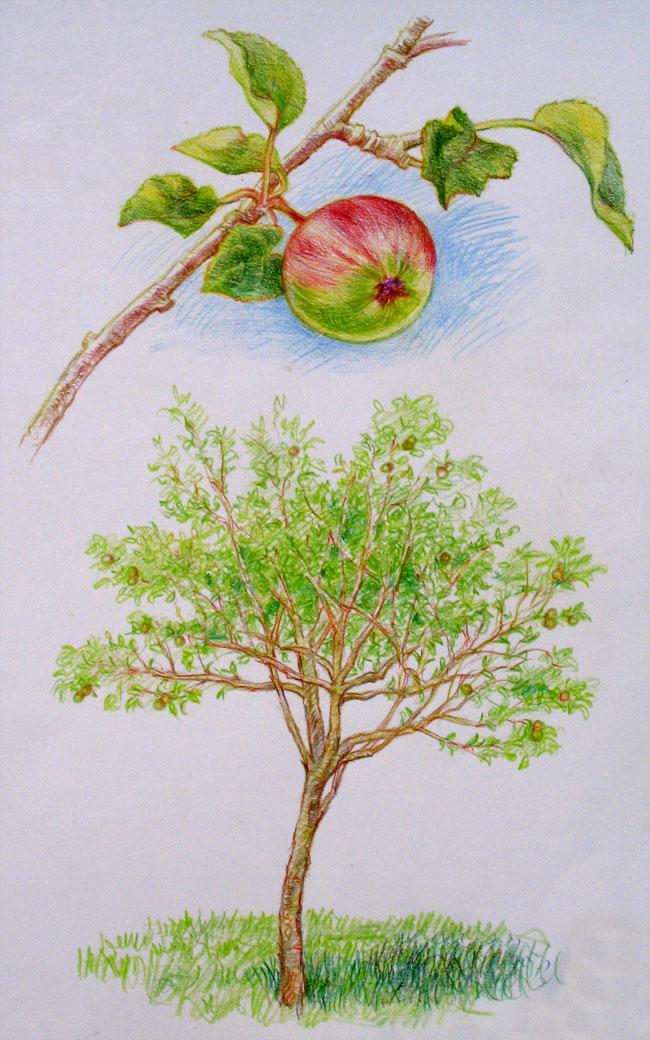 650x1040 Apple Tree Each Day Is A Celebration