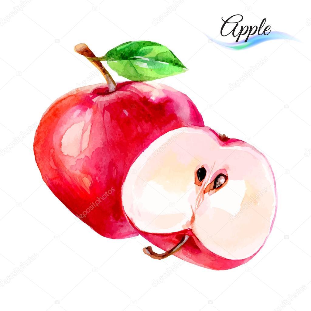 1024x1024 Apples Drawing Watercolor Stock Vector Dvargg