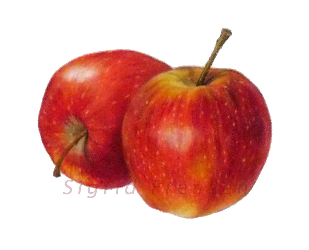 1024x828 Two Small Apples I Made This Drawing For My Father When