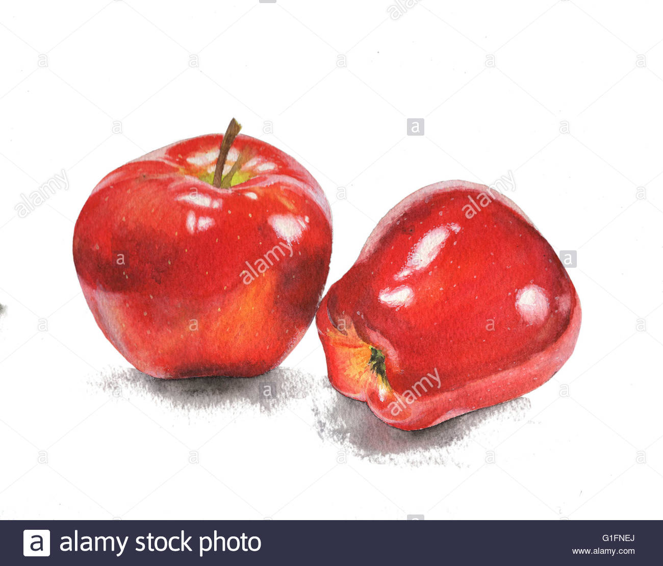 1300x1110 Watercolor Painting Illustration Isolated Apples Object Design