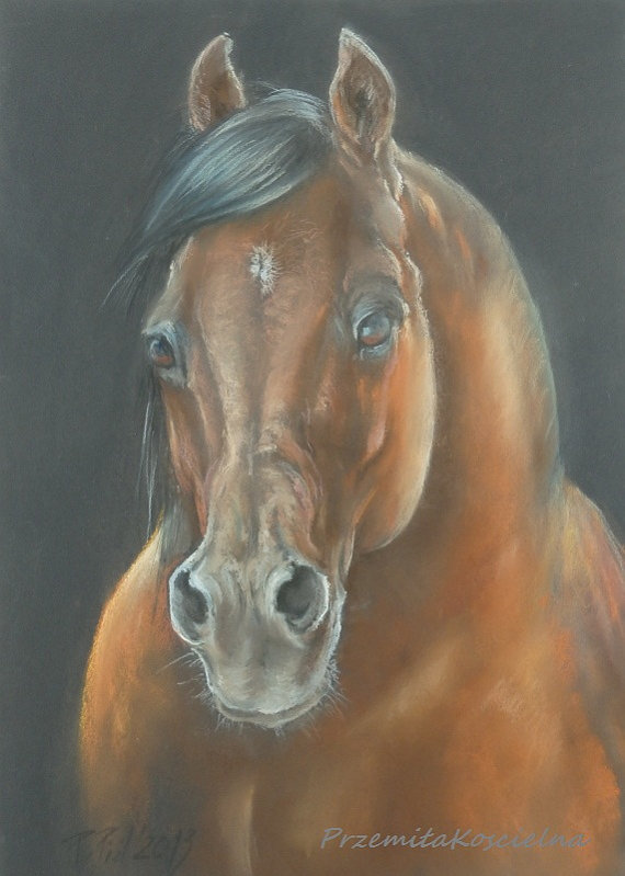 570x799 Arabian Horse Portrait Original Pastel Drawing Brown Horse