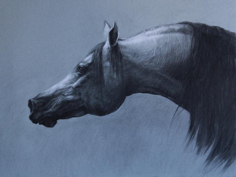800x600 Arabian Horse 2 By Mewannalearn