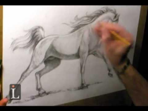 480x360 Arabian Horse Drawing