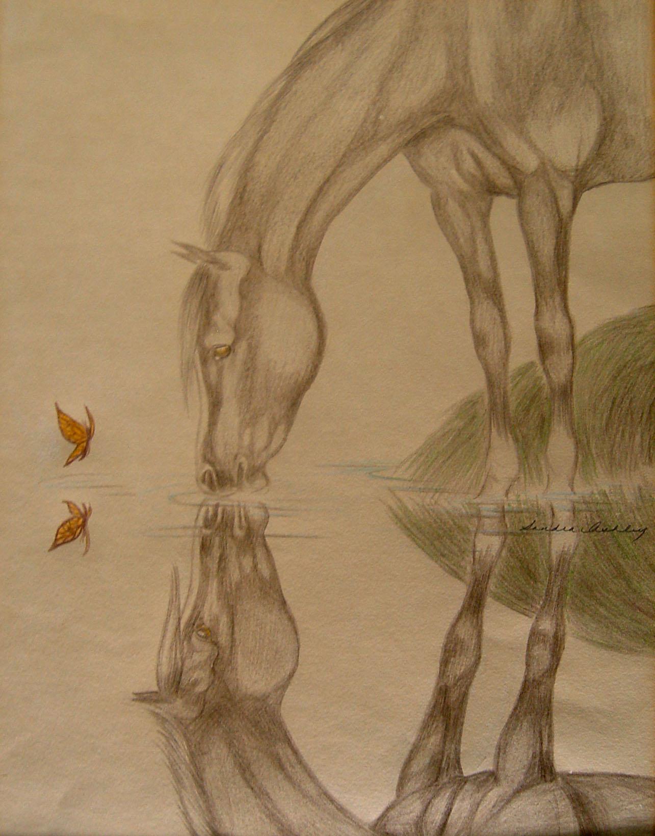 1285x1640 Arabian Horse Reflection Drawing Omero Home
