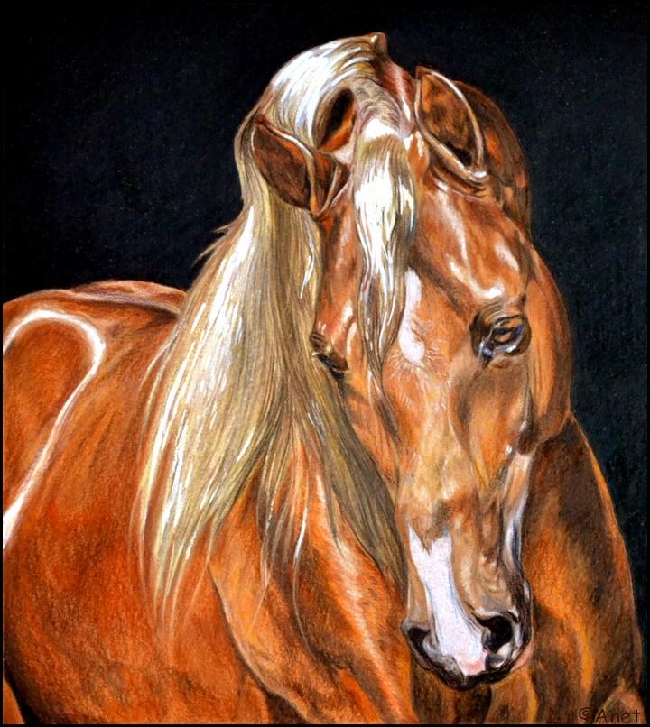 720x806 Drawing Arabian Horse By Ennete