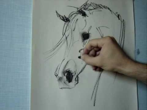 480x360 How To Draw Arabian Horse Head Gabriel Tora