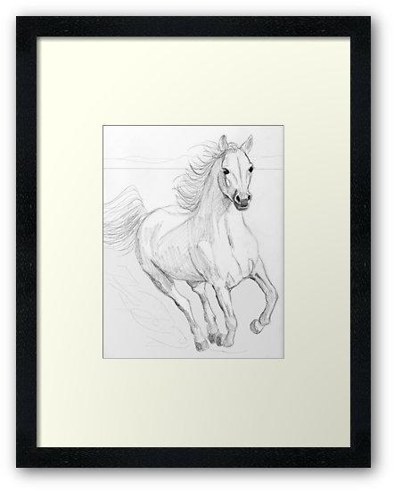 442x550 Running Arabian Horse Pencil Drawing Framed Prints By Teddie
