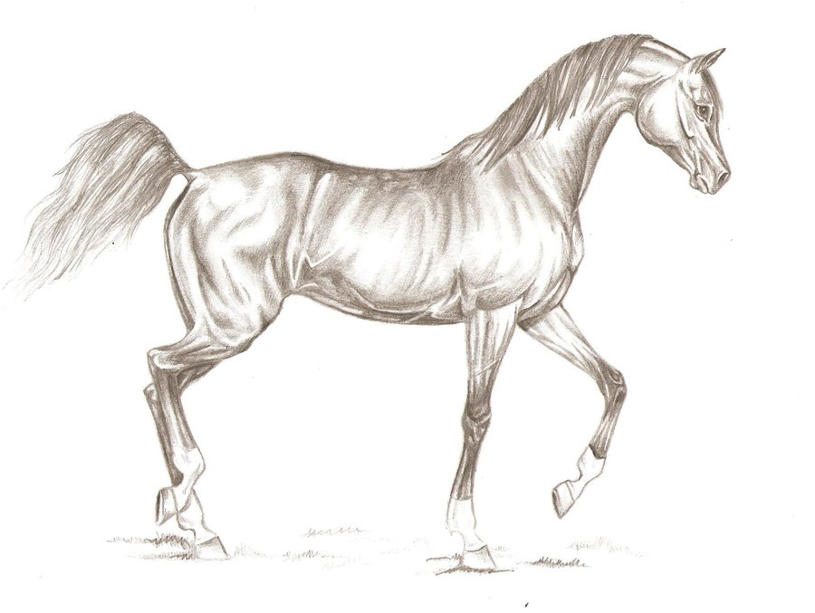 900x677 Arabian Horse 2 By Gaelleondie