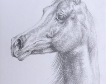 340x270 Arabian Horse Portrait Original Pastel Drawing Brown Horse