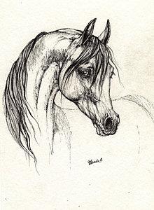 220x300 Arab Horse Drawings