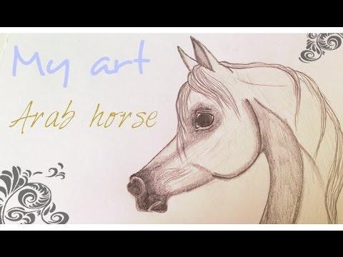 480x360 Arabian Horse Speed Drawing (Pencil)