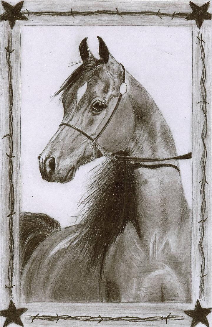 720x1109 Arabian Horse Pencil Drawing By Christiancowgirl116