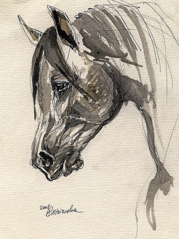 570x763 Arabian Horse Equine Art Horse Portrait Equestrian