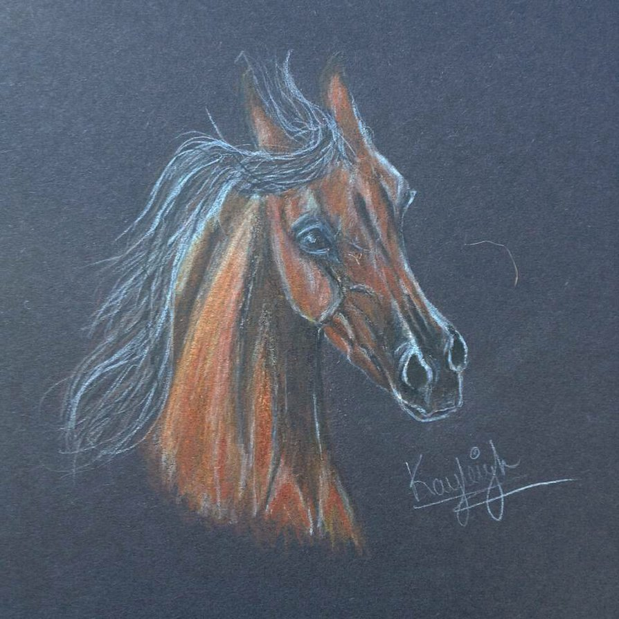 894x894 Arabian Horse Head Drawing No Reference Used By Kxyleigh