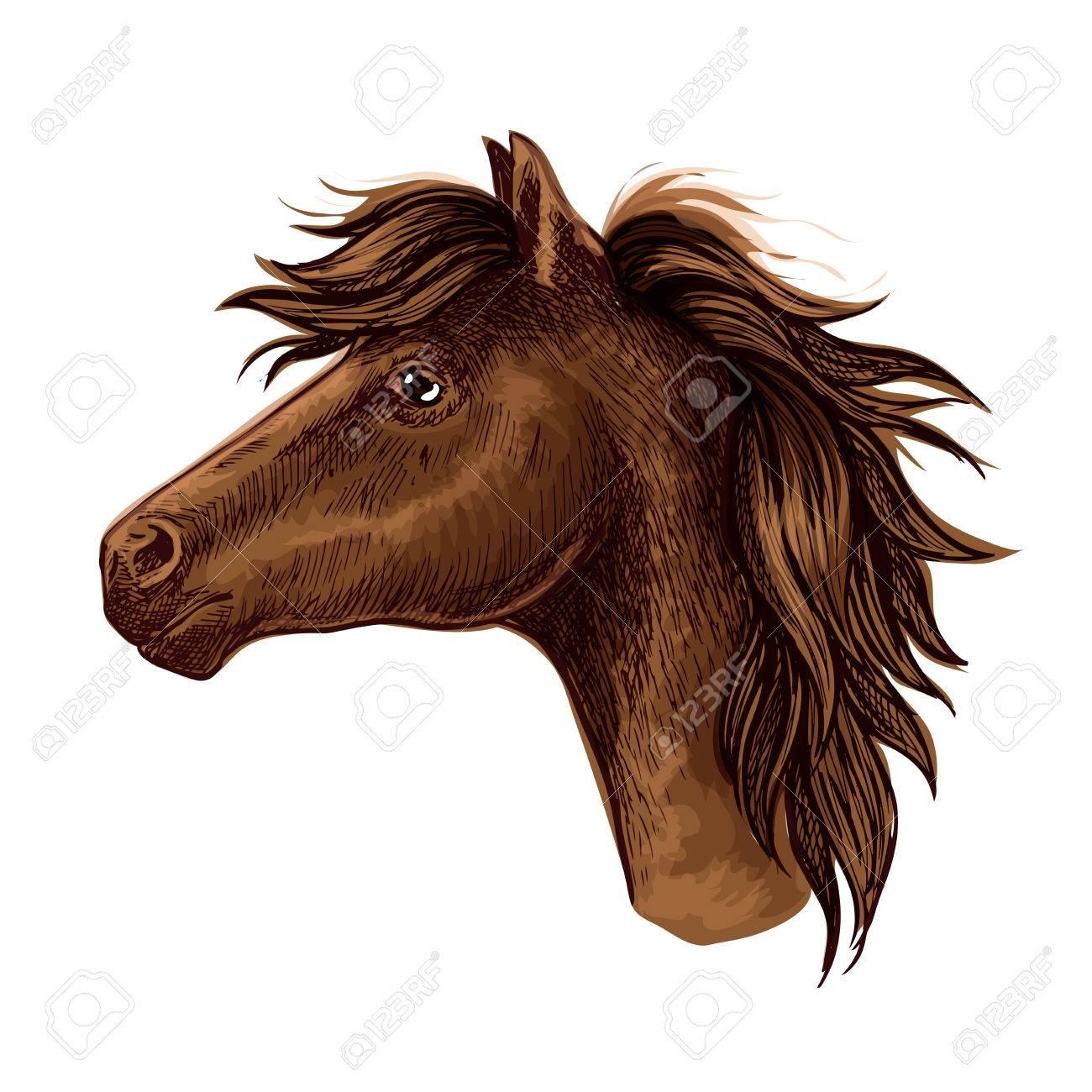 1300x1300 Brown Arabian Horse Animal Head. Beautiful Young Foal With Kind