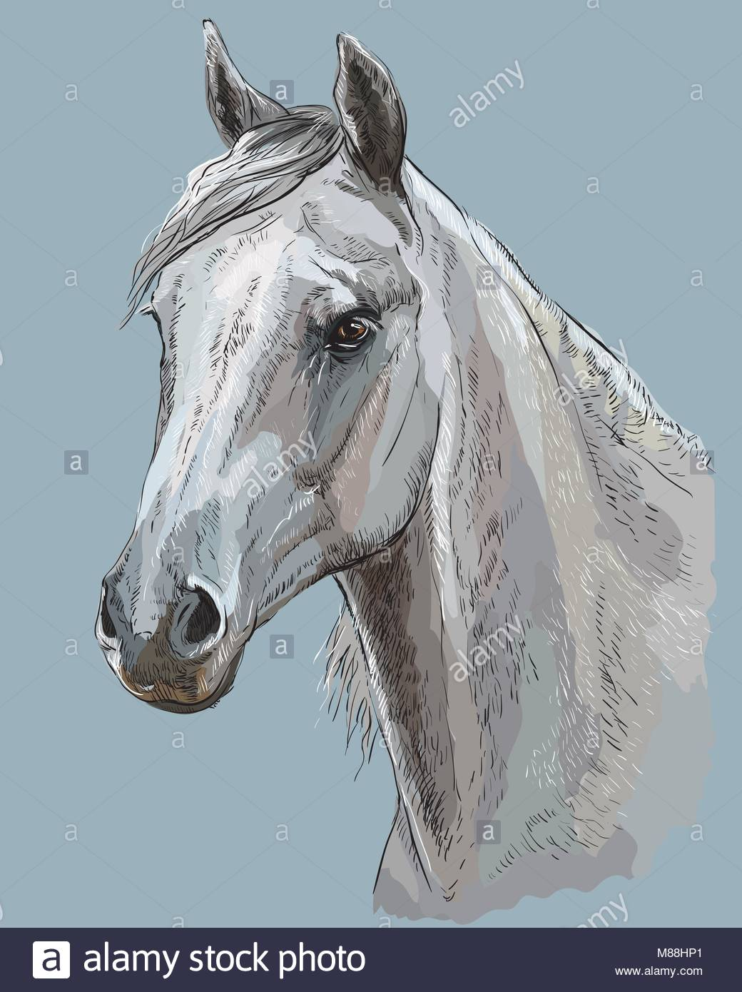 1040x1390 Colorful Portrait Of White Arabian Horse. Horse Head With Long