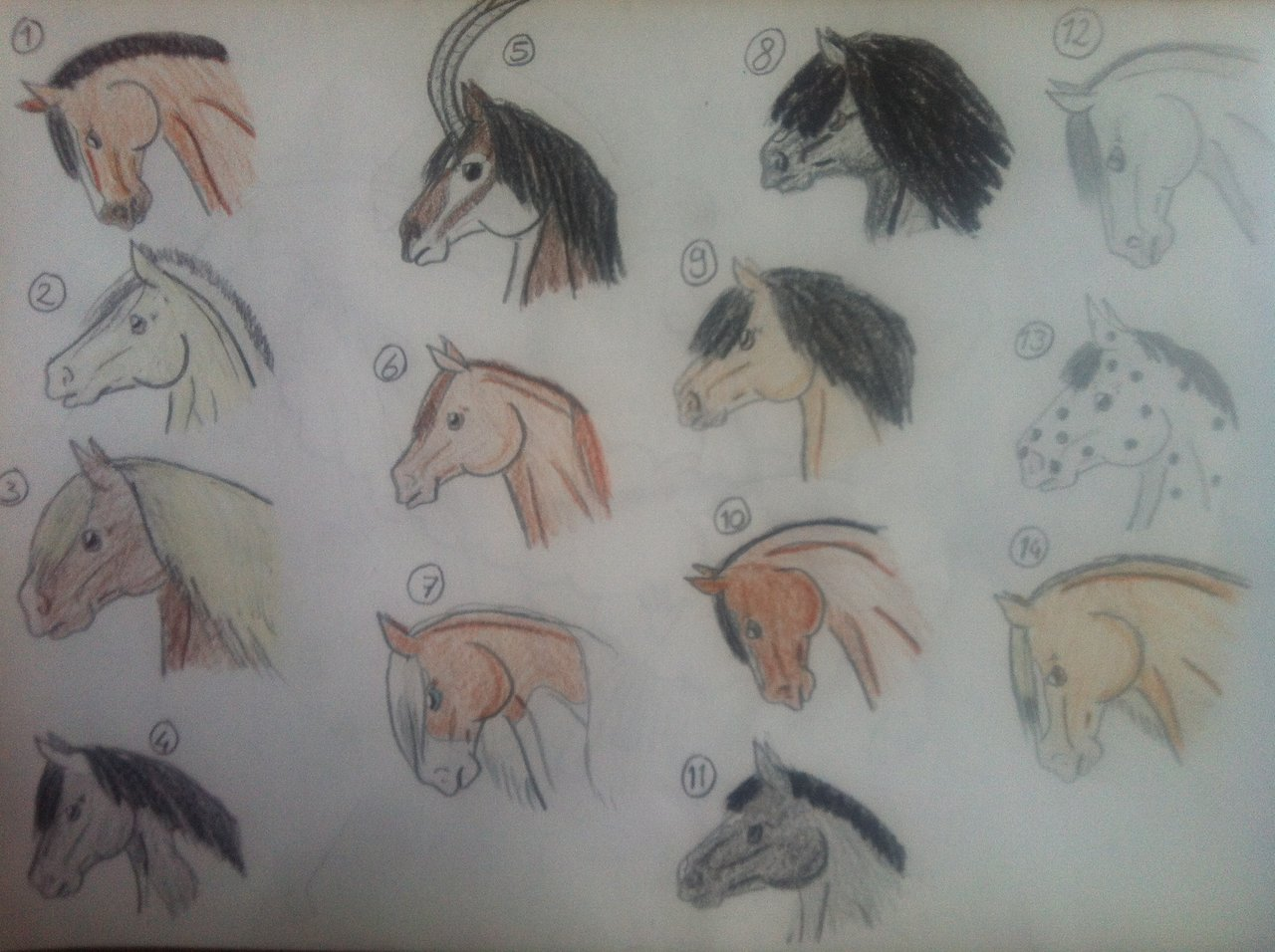 1280x956 Horse Head Adopts, Draw Or Points 3 Left By Nikkiiq