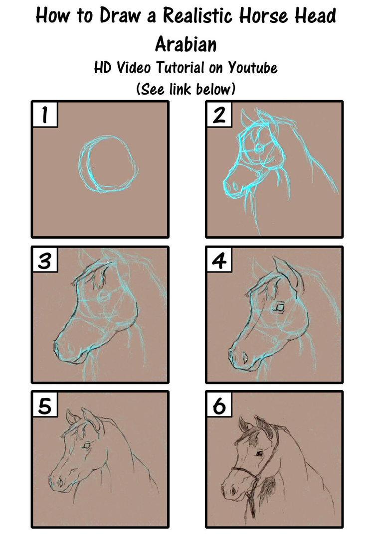 746x1072 How To Draw A Realistic Horse Head Arabian By Savannaw