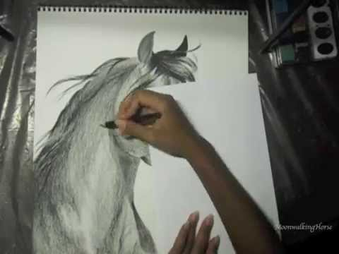 480x360 Moved Channels, See Description Arabian Horse Speed Drawing