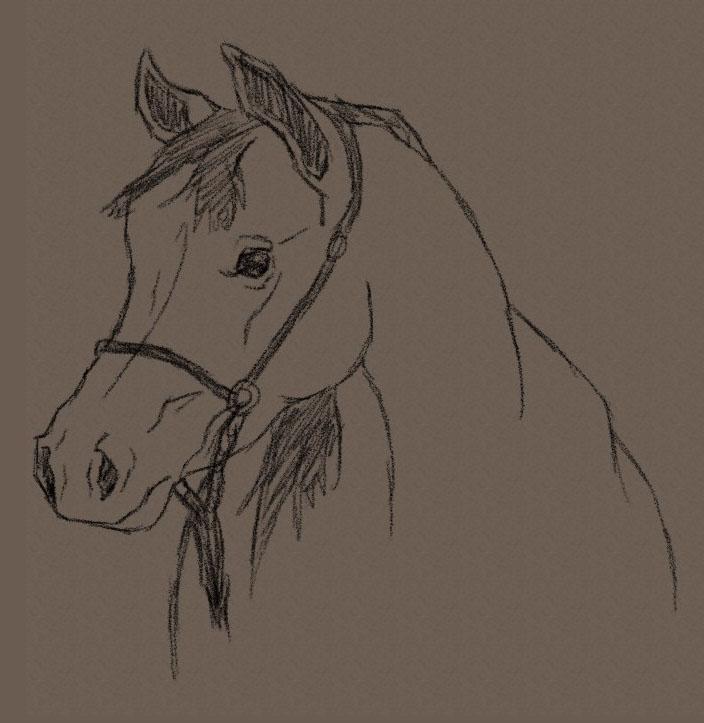 704x723 Savanna Williams How To Draw A Horse Head