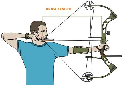 431x300 How To Choose A Compound Bow For Beginners