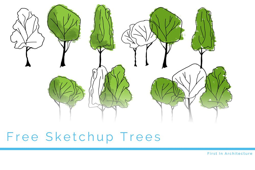 1000x666 Free Tree Elevations For Sketchup First In Architecture