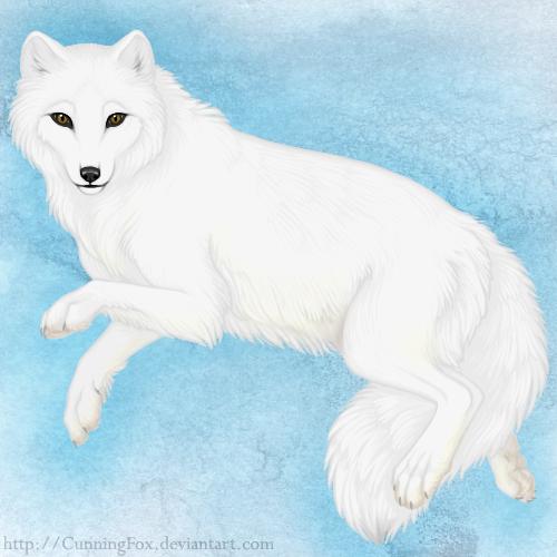 500x500 Arctic Fox By Bear Hybrid