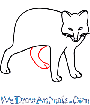 300x350 How To Draw An Arctic Fox
