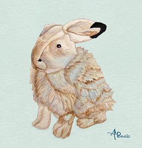 288x300 Arctic Hare Prints Fine Art America
