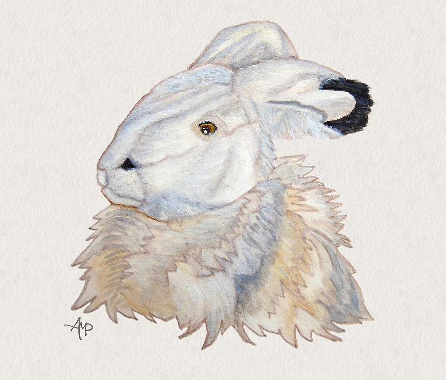 900x768 Cuddly Arctic Hare Watercolor Painting By Angeles M Pomata