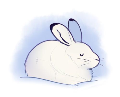 500x402 Hare Drawing Tumblr