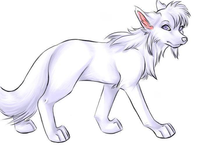 680x520 Cute Drawing Of A Arctic Wolf Wolf Drawings Arctic
