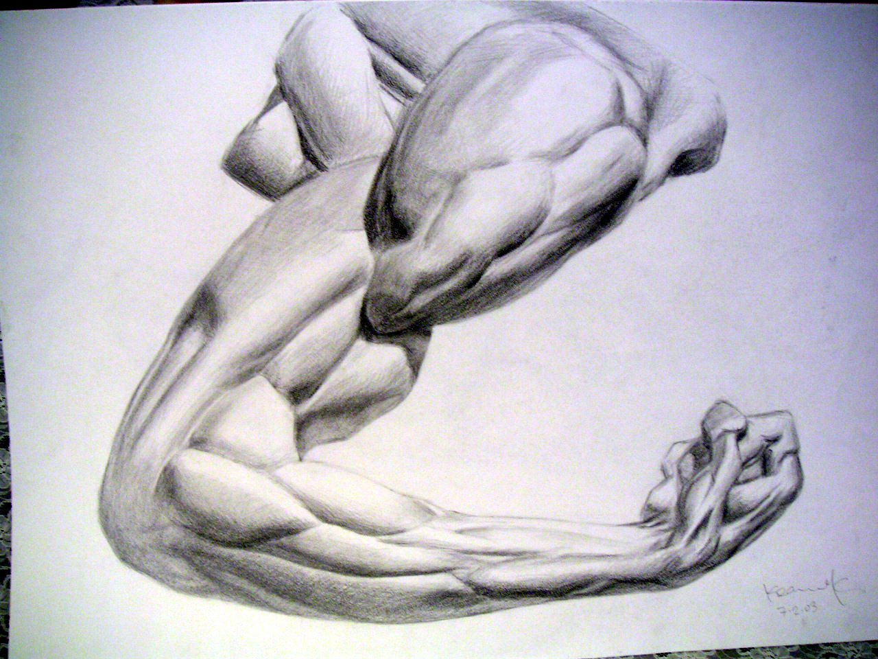 Arm Muscle Drawing At Getdrawings Free For Personal Use Arm