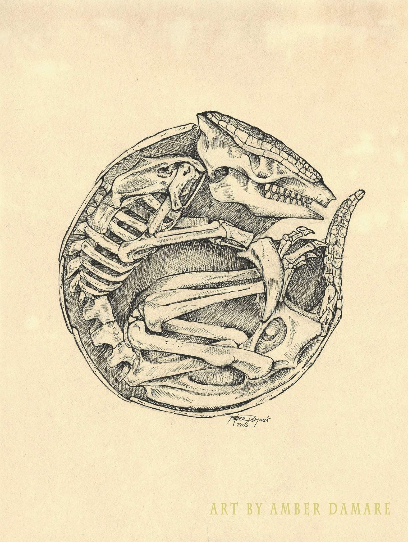 1543x2048 Armadillo Drawing 5''X8'' Animal Skeleton