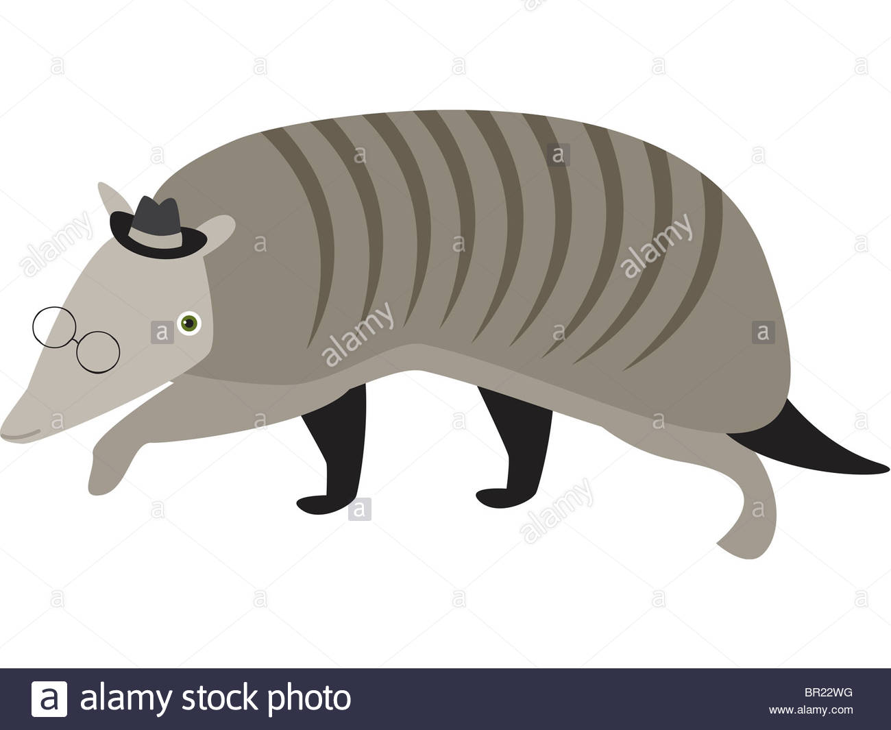 1300x1065 Drawing Of A Nine Banded Armadillo Stock Photo 31393644