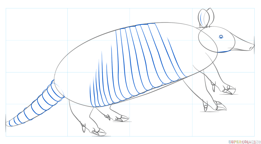 900x496 How To Draw An Armadillo Step By Step Drawing Tutorials