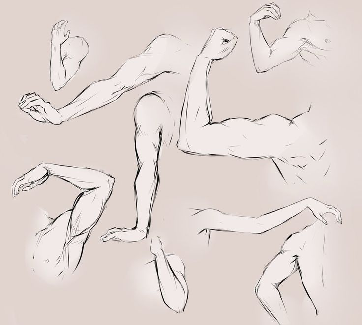 736x662 32 Best Drawing The Arms And Legs Images On Anatomy