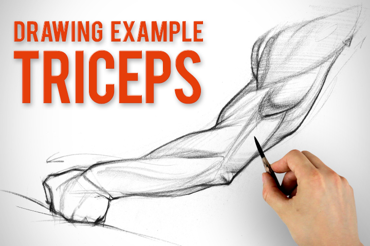 720x480 How To Draw Arms Triceps Assignment Example Proko