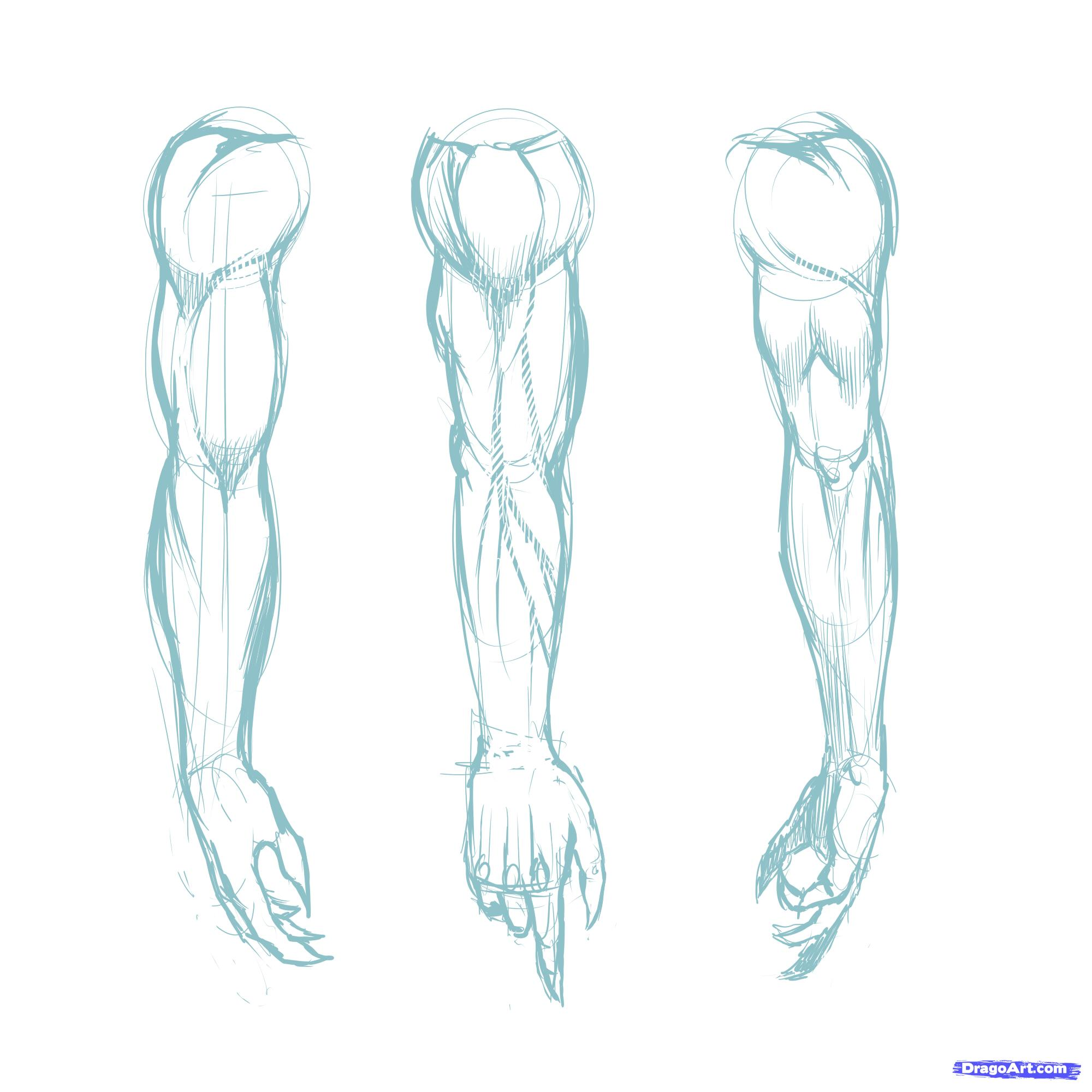 2000x2000 How To Draw Muscles, Step By Step, Anatomy, People, Free Online