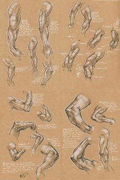 236x352 Drawing Art People Arms Draw Hand Human Anatomy Muscles Biceps