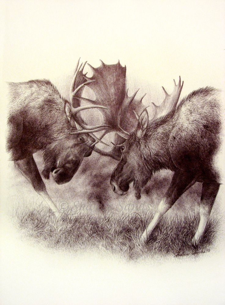 736x999 Gallery Wildlife Sketches,