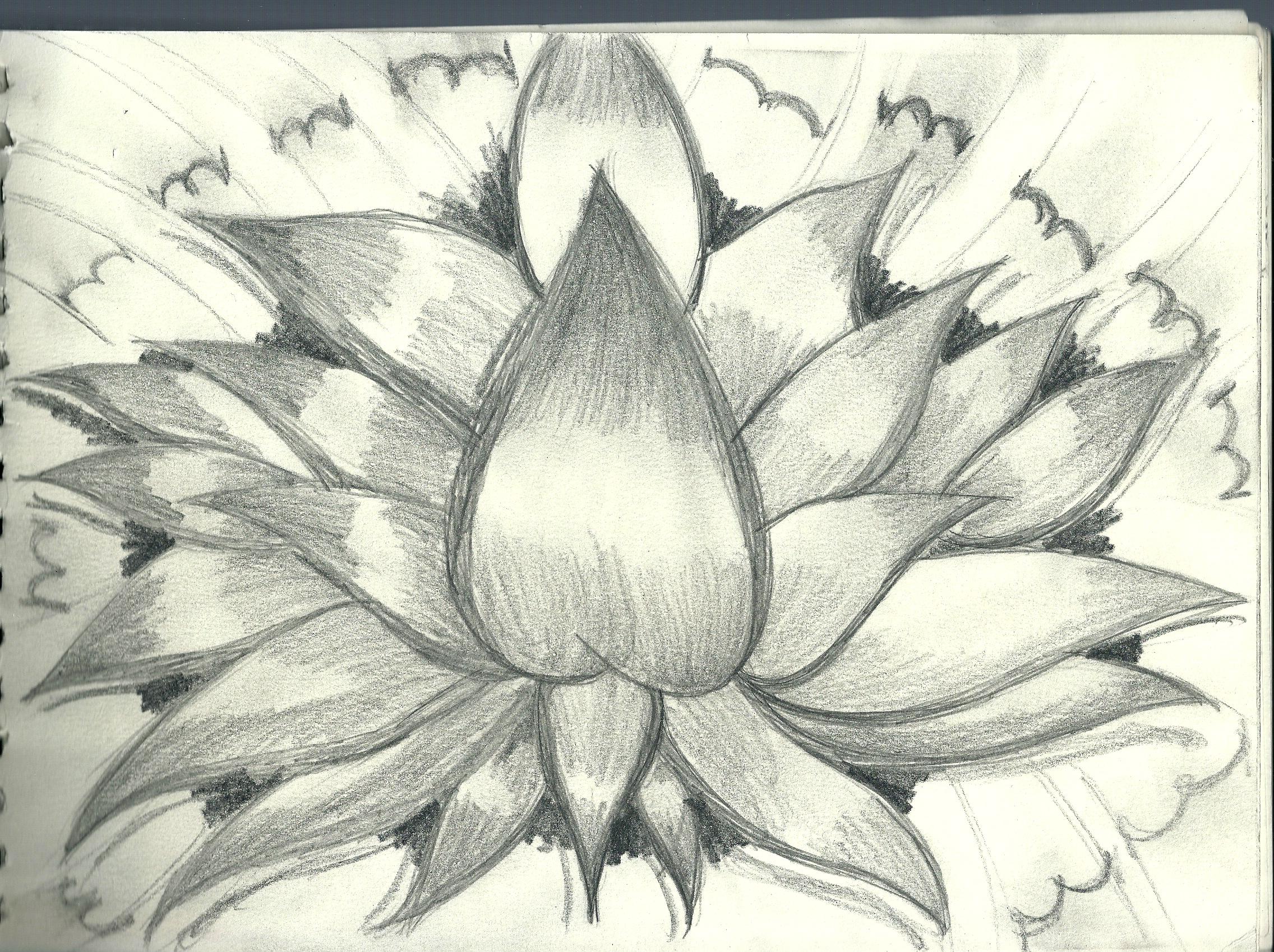 2272x1699 Image Art Drawings Flowers