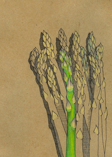 375x525 Asparagus Drawing Tries To Get Them Drawn. Asparagus