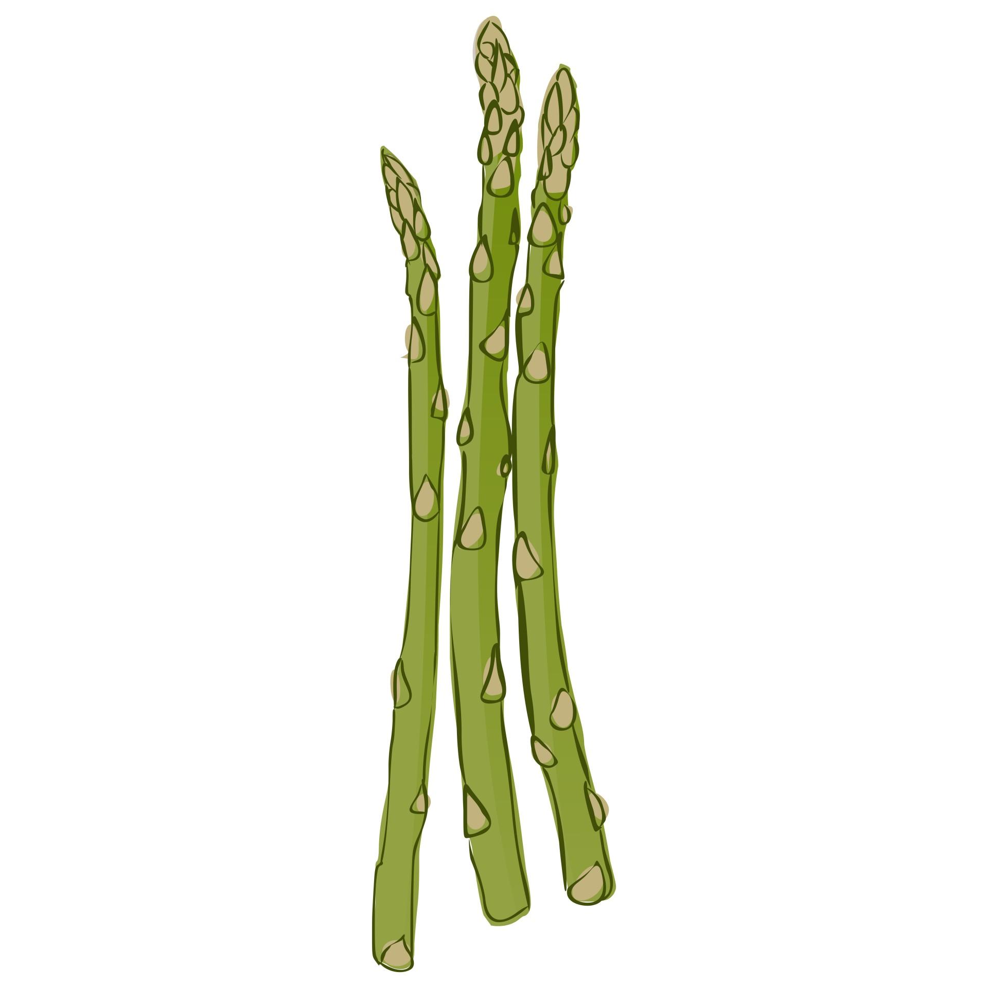 1920x1920 Asparagus Free Stock Photo